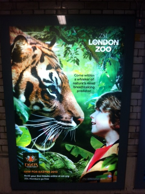 Last chance for the Sumatran tiger - Fascinating Africa